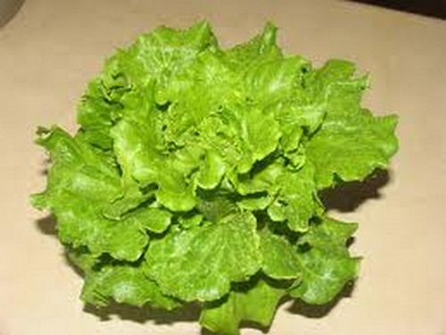 lettuce-leaf